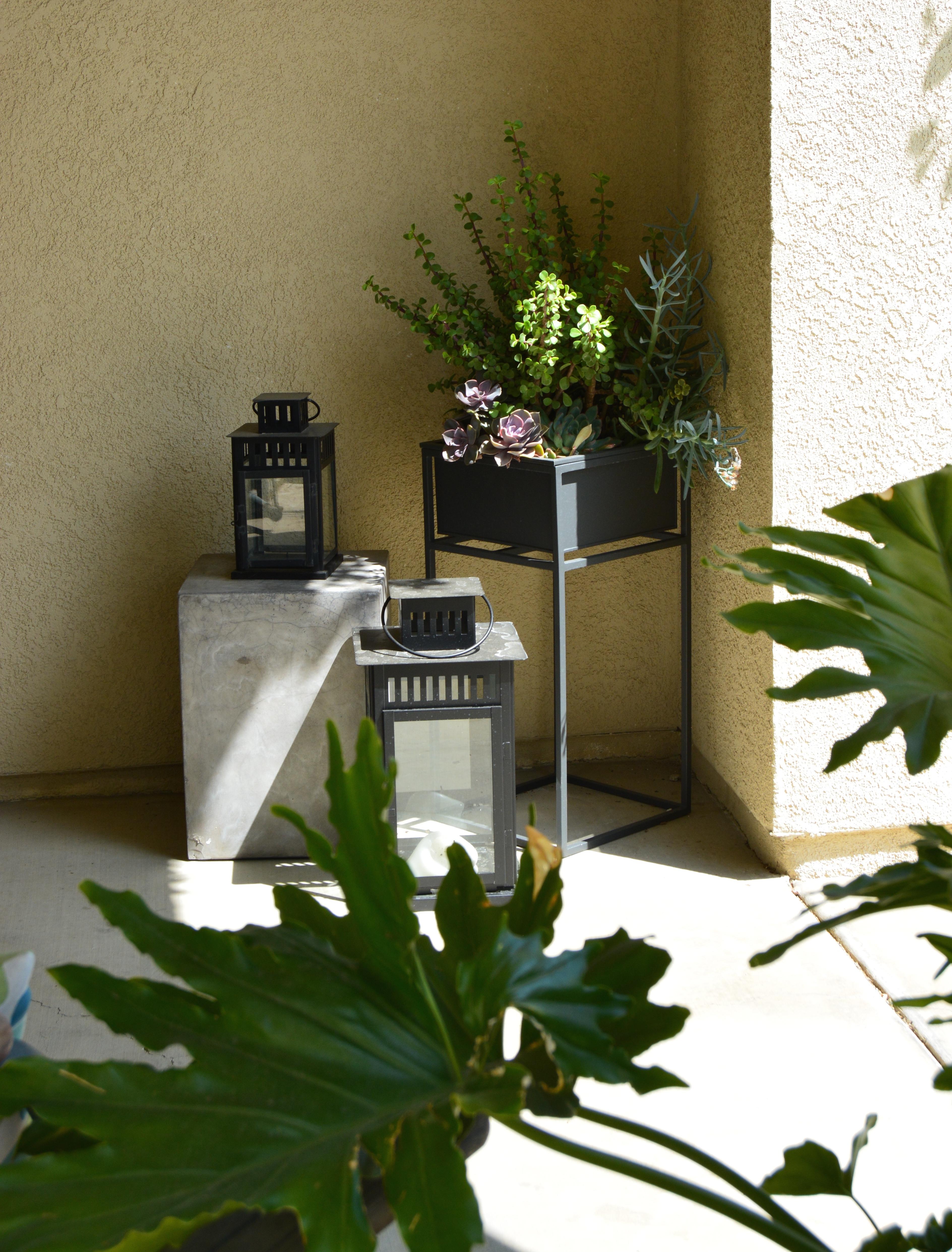 CB2 succulent Planter and lanterns